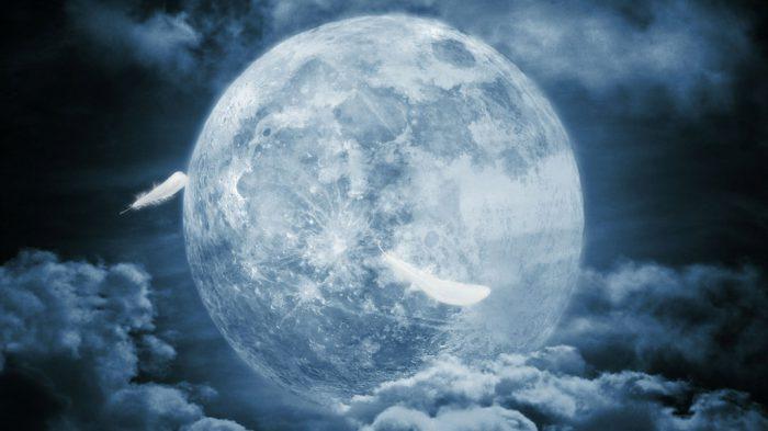 羽根舞う月夜